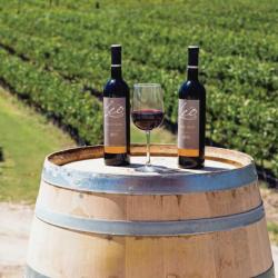 Vino mexicano ganó el premio al mejor Cabernet Suavignon del mundo