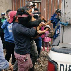 Jauría de perros ataca a una mujer en Bolivia