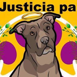 Piden justicia para perrita que fue enterrada viva por su dueña