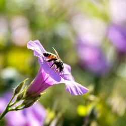 Preveen aumento de producción de miel mexicana